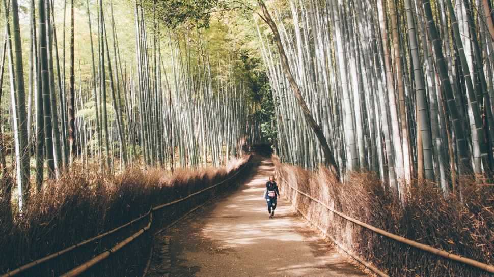kyoto_japan_bamboogrove