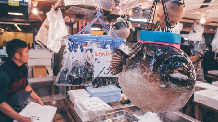 toquio-japao-tsukiji-peixe-balao