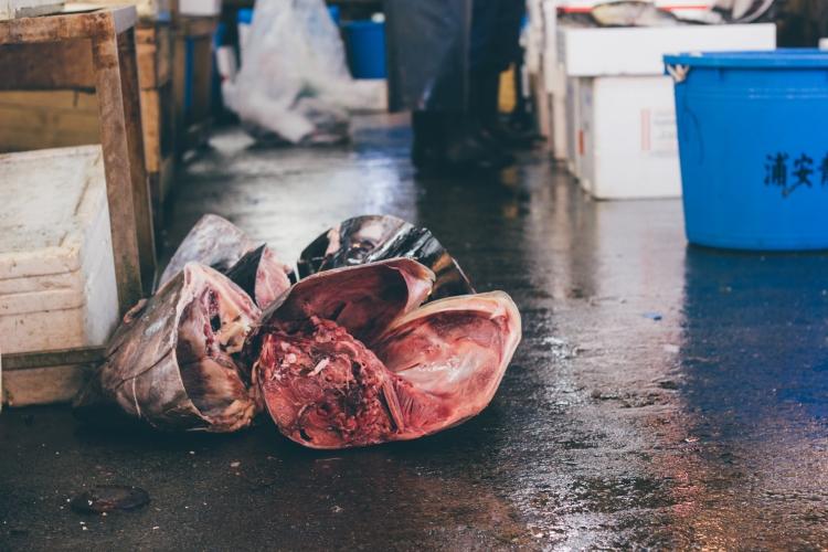 toquio-japao-tsukiji-peixe