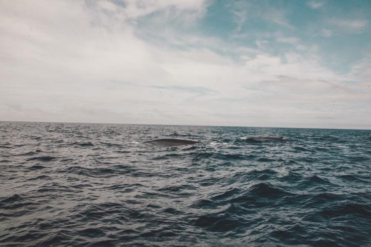 terceira-baleias