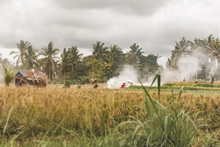rice-fields_ubud_bali