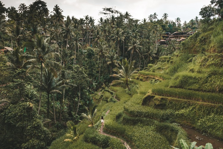 tegalalang-rice-terraces_pipa_ubud_bali