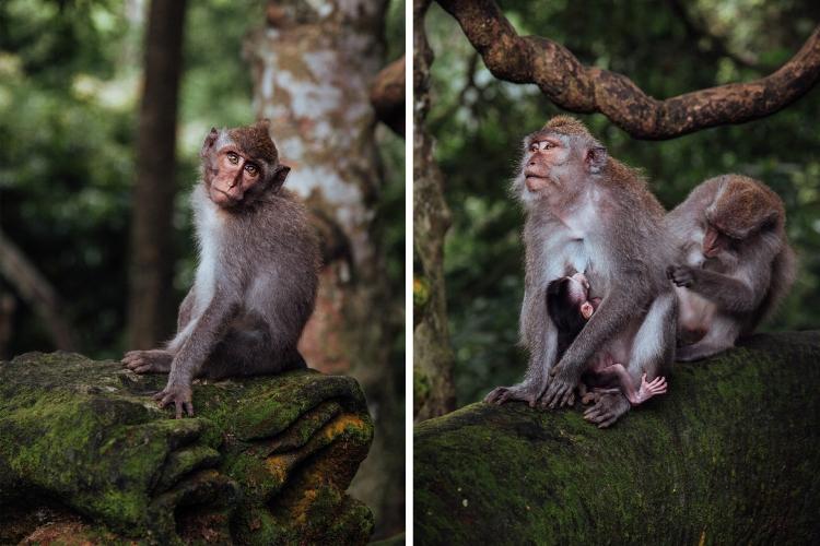 ubud_monkey-forest_bali
