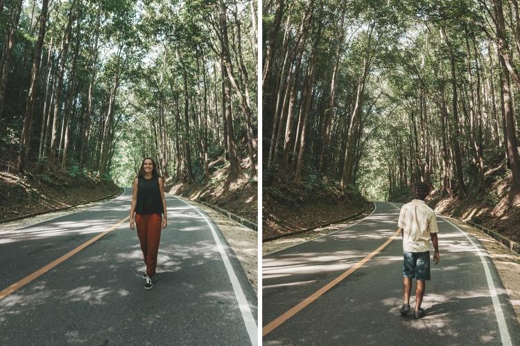 man-made-forest-pipa-gui_bohol