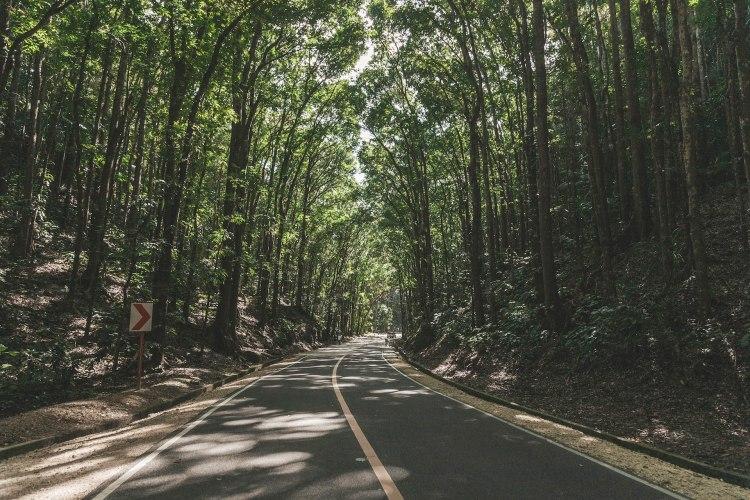 man-made-forest_bohol
